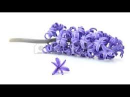 Handmade Flowers Paper - how to make tissue paper flower violet handmade paper flowers