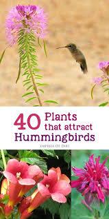 native missouri plants 97 best native missouri plants images on pinterest native plants
