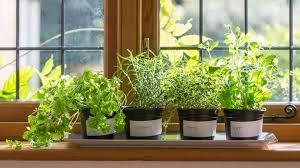 indoor herb garden ideas indoor herb garden ideas garden season