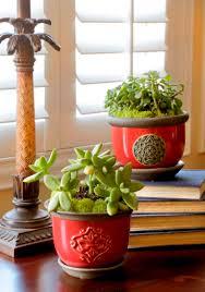 how winter indoor plants bring joy and promote wellness