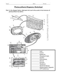 photosynthesis worksheet 8th grade science photosynthesis and