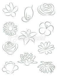 set of flowers vector illustration drawing flowers drawings