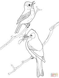 least flycatcher birds coloring page free printable coloring pages