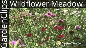 wild flowers in wild meadows gardening w wildflowers how to plant and maintain a wildflower