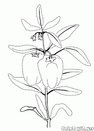 coloring page sweet pepper