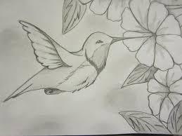 25 hummingbird drawing ideas bird