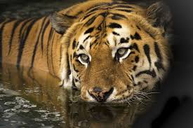 wildlife images Wildlife images pixabay download free pictures jpg