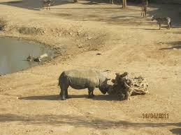 Tisch Family Zoological Gardens - החצר האפריקאית picture of tisch family zoological gardens