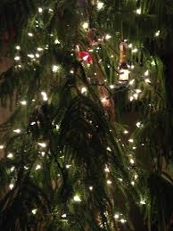 How To Put Christmas Lights On A Tree by Hanging Ornaments On The Christmas Tree That U0027s Not Here The