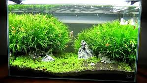 best led light for planted tank kessil is equal to page 2 the planted tank forum
