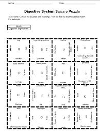body system worksheets mreichert kids worksheets