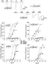 α5 subunit alters desensitization pharmacology ca permeability