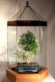 Indoor Garden Design by 39 Best Bonsai Images On Pinterest Bonsai Trees Bonsai And