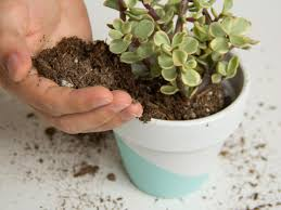 succelents best soil for succulents diy