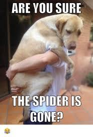Spider Meme Misunderstood Spider Meme - are you sure the spider is gone meme on me me