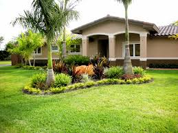 backyard ideas for landscaping with palm trees house design and
