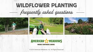 faqs about wildflowers and wildflower meadows