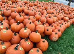 halloween city elgin il randy u0027s vegetables enjoy illinois