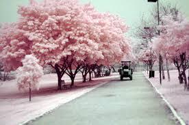 nature pink tree vintage image 138565 on favim