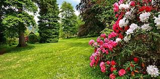 pflanzen f r balkon pflanzen fr balkon und garten stilvoll pflanzen für garten tedra