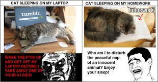 Cat Laptop Meme - just for fun pic cat sleeping on my laptop vs cat sleeping on my