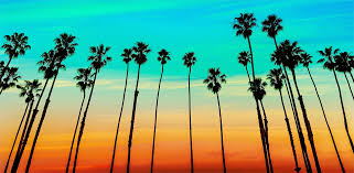 pictures of palm trees qige87 com