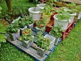 How To Grow A Vegetable Garden In Pots Inspiring How To Make A Vegetable Patch In Your Garden Fall Plants