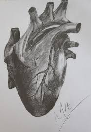 human heart detailed graphite drawing art time lapse heather