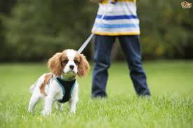 ten fun facts about dogs for kids pets4homes