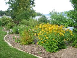 native plant solutions great to hide septic mound septic mound landscaping ideas