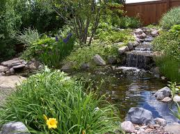 exterior backyard ponds fish pond maintenance u201a pond backyard