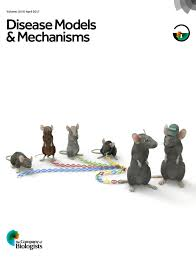 heterozygous vangl2looptail mice reveal novel roles for the planar