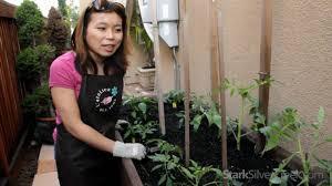 urban vegetable gardening 4 planting tips youtube
