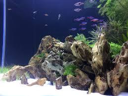 Substrate Aquascape My Latest Aquascape Album On Imgur