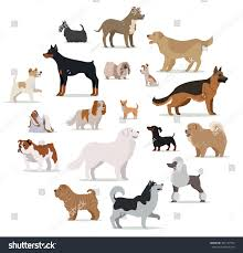 Types Of Dogs Dogs Breed Set Isolated On White Stock Vector 467137910 Shutterstock