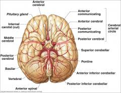 Pyramids Of The Medulla Neuro Lab 2 Arterial Supply To Brain Flashcards Cram Com
