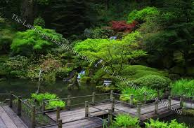 planting ideas for japanese gardens