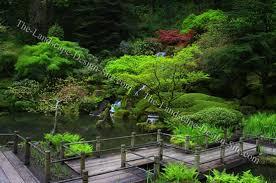 Japanese Garden Ideas Planting Ideas For Japanese Gardens