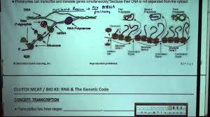 mcat study guide pdf mcat biology rna u0026 the genetic code sample lesson part 1 youtube