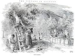 ancient romans grew their grape vines on trellises of elms