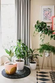 258 best coup de projecteur sur les plantes d u0027intérieur images