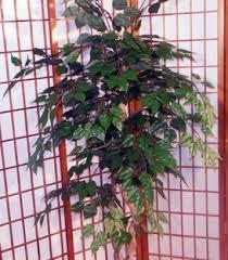 buy birch silk 5 foot tree custom made on wood on