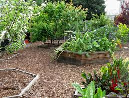 Backyard Fruit Trees Bay Friendly Garden Tour Urban Agroecology