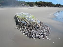 Washington beaches images Gregoire feds must help with tsunami debris on washington beaches jpg
