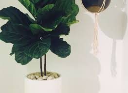 indoor flowering plants plant 5 big and beautiful indoor plants beautiful indoor plants