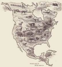 Big Map Of North America by Animals Of North America From A 1920 Geography Textbook