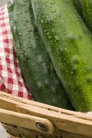 is watermelon related to cucumber and gourd home guides sf gate