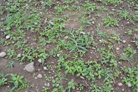 how to get rid of and or control weeds