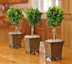 Topiaries Plants - 65 best topiaries images on pinterest gardening topiaries and