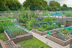 unique decoration vegetable garden design with backyard vegetable